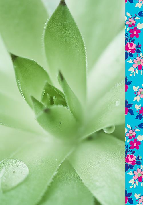lady green cosmétiques bio engagements2